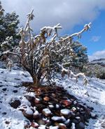 snow-cactus-2