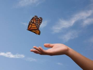 Let Go Butterfly