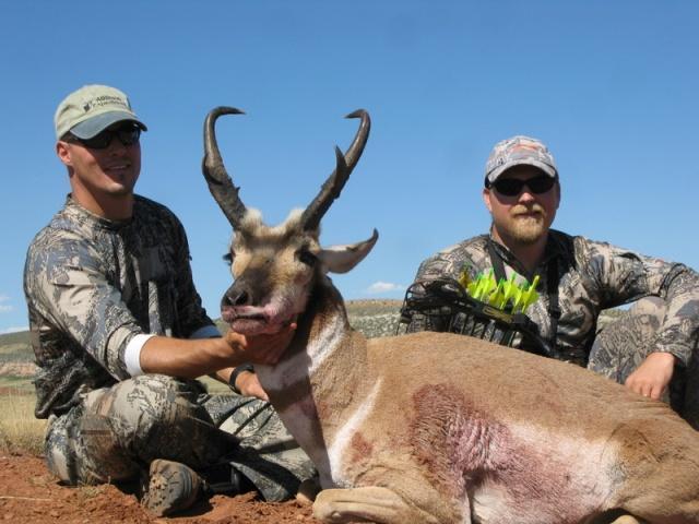 Atkinson antelope