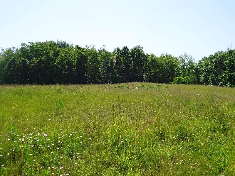 Engle Road Wetland