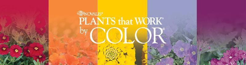 color program header