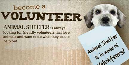 Volunteering For  Year Olds Dog Walking