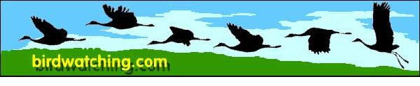 Birdwatching Dot Com