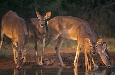 june 12 ellis wildlife expo