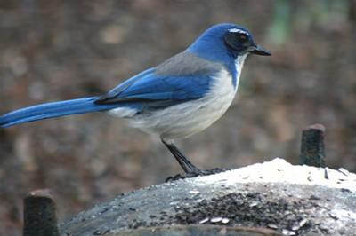 Bird from GBBC 2010
