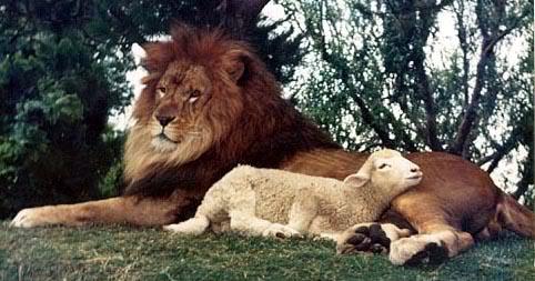 LionNLamb