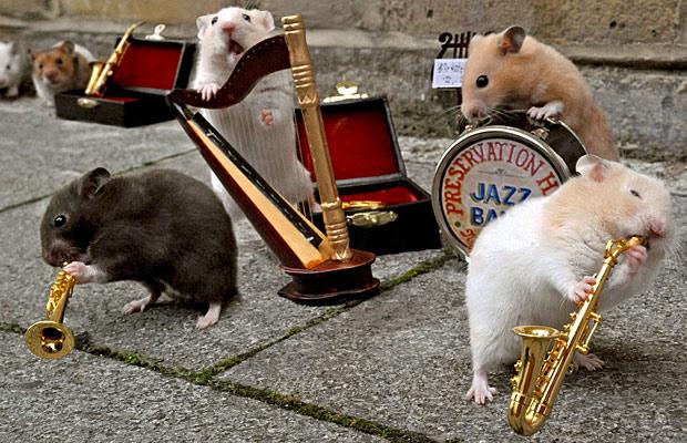 HamsterBand
