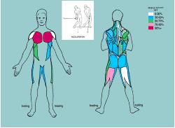Golf muscles 2