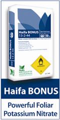 Haifa 120X240