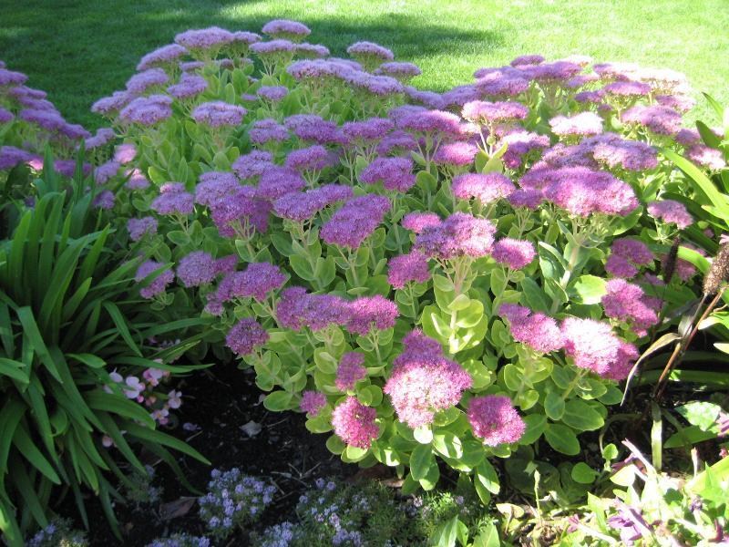 Bellvue Garden