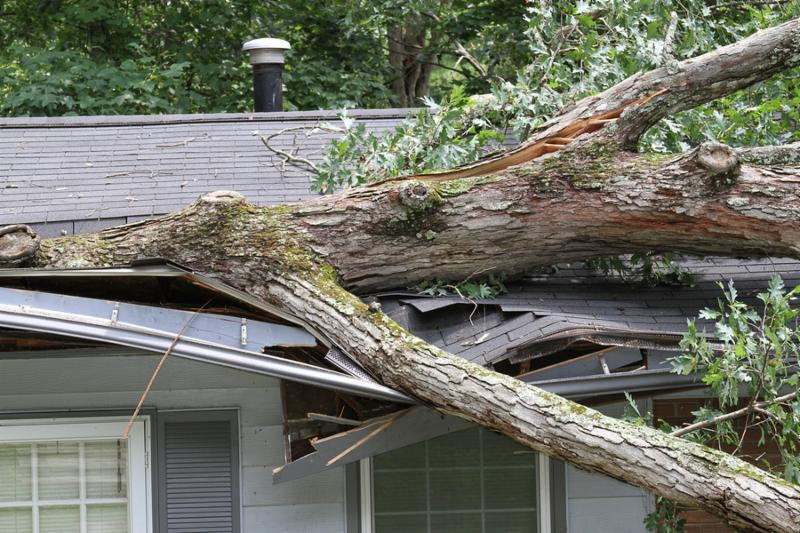 House roof crushed by a white oak tree during a storm