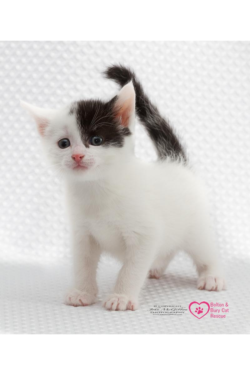 Bolton Bury Cat Rescue
