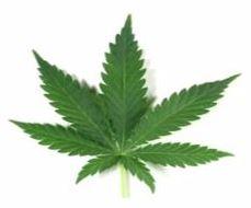 Cannabis Webinar