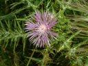 Smaller Purple Flower