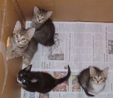 Wanda's Kittens