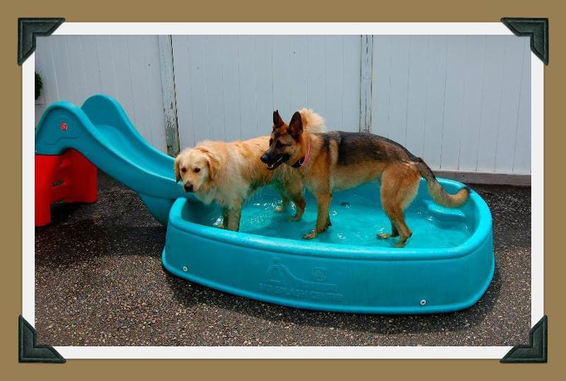Pool in backyard with Nova & friend