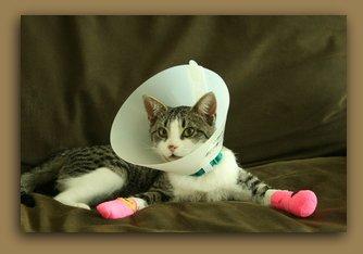 Cat in bandages