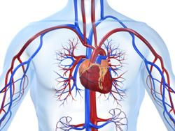 cardiovas