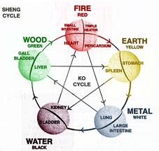 Zang Fu Organ Systems