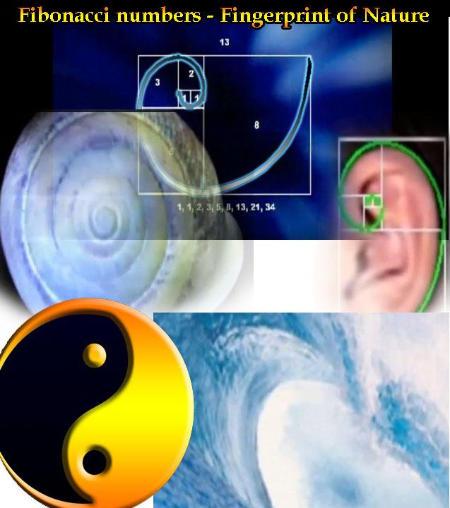Fibonacci Fractals