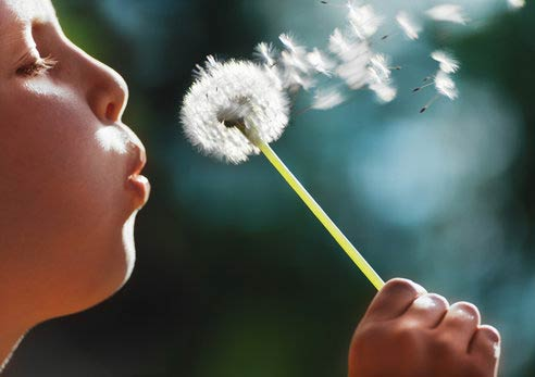 Child blowing dandilion