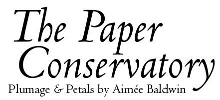 The Paper Conservatory: Plumage & Petals by Aimee Baldwin