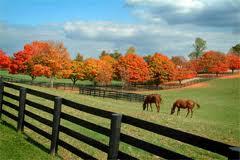 Kentucky horse farm in the fall