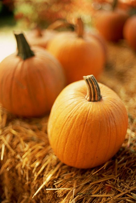 Pumpkins vertical