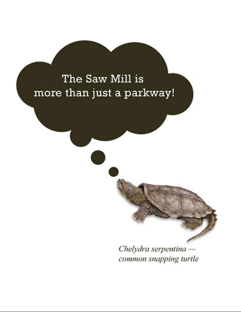 BioBlitz Talking Turtle