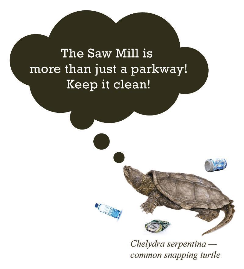 stewardship turtle