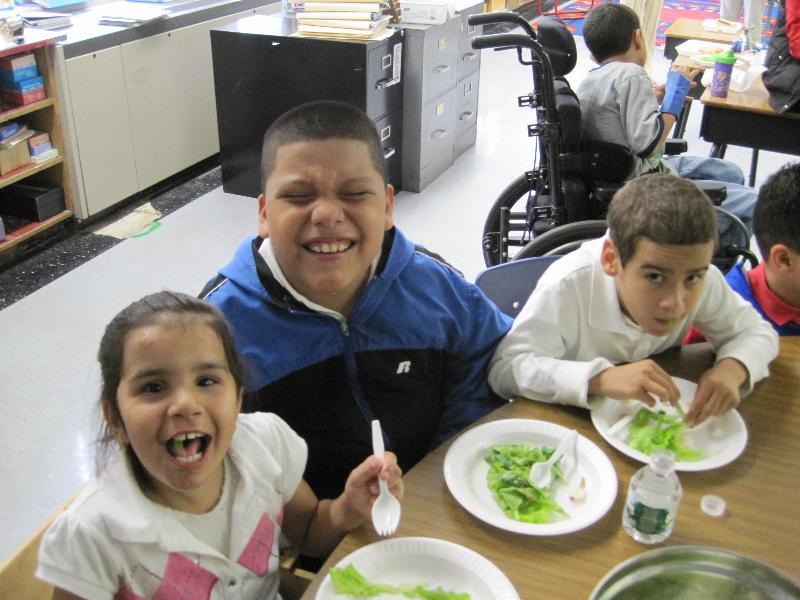 school 29 salad