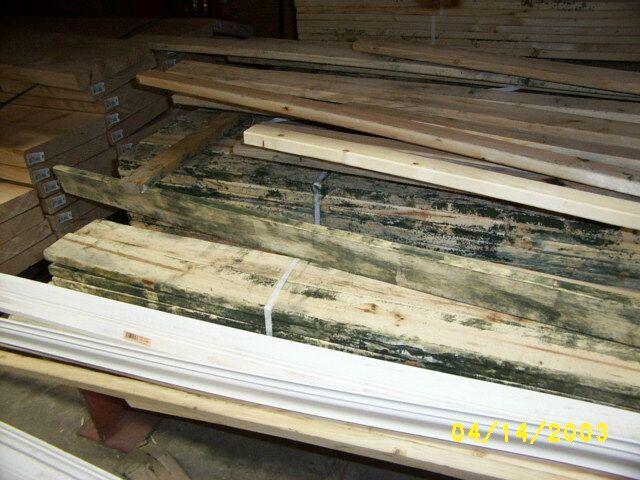 Moldy Lumber