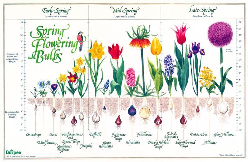 Garden Guru Bulbs – What Should I Plant in My Garden