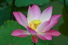 vegan cooking classes vegan workshops lotus flower