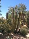 Arizona Deseert Plants