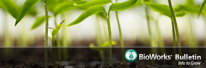 BioWorks Bulletin Header