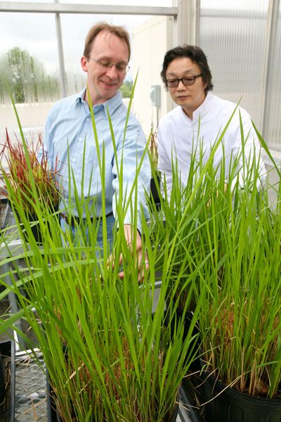 UAH, HudsonAlpha researchers join forces to stop invasive plants