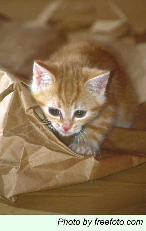 Kitten with bag
