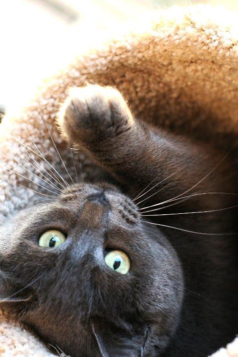 cute cat photo contest