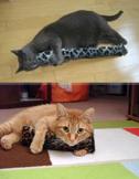 Cat Pllows