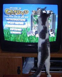 catdvd