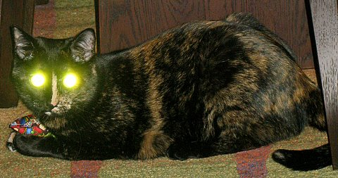cat eyes glowing