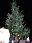 Winslow Community Christmas Tree, Bainbridge Island, WA