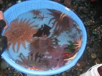 Critter Dive at IslandWood, Bainbridge Island, WA