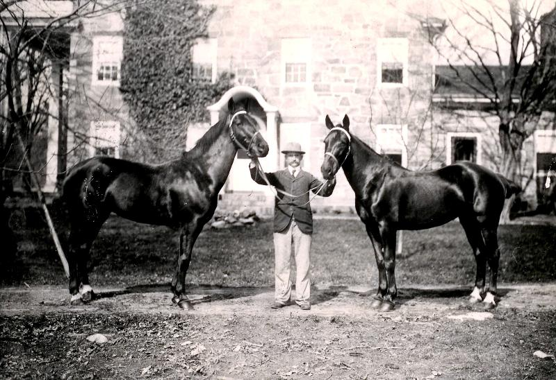 Horses at Hearthside