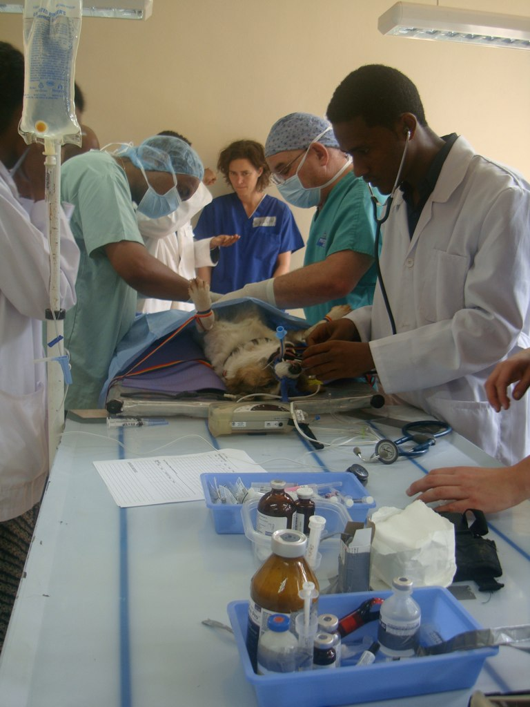 Jimma during surgery