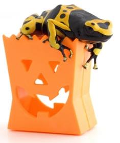 halloween-frog.jpg