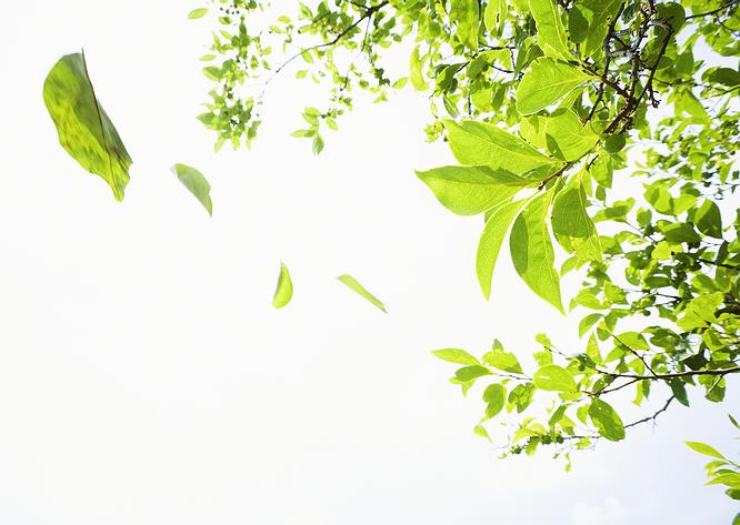 falling_leaves.jpg