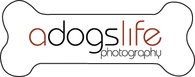 A Dog's Life Photography
