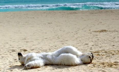 Beach Bear